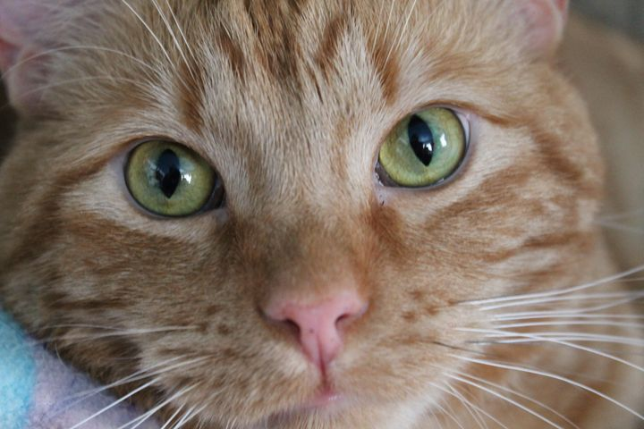 Larry the cat - art