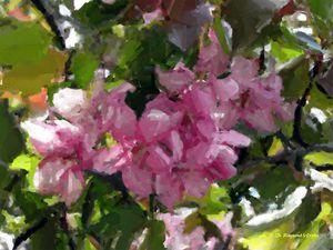 Crabapple in Spring - D. Raymond-Wryhte