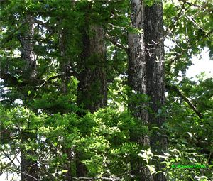 Cypress Five - D. Raymond-Wryhte