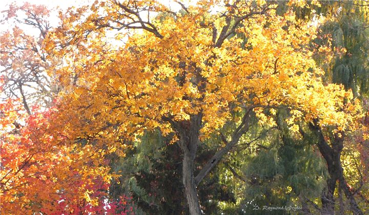 Heavenly Sunshine - D. Raymond-Wryhte