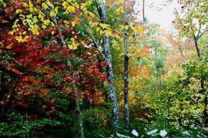 Rain in the Forest - D. Raymond-Wryhte