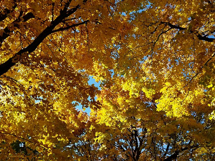 Maple Clouds - D. Raymond-Wryhte