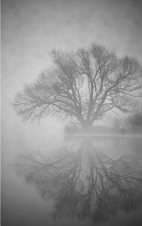 Ghost Willow in Gray - D. Raymond-Wryhte