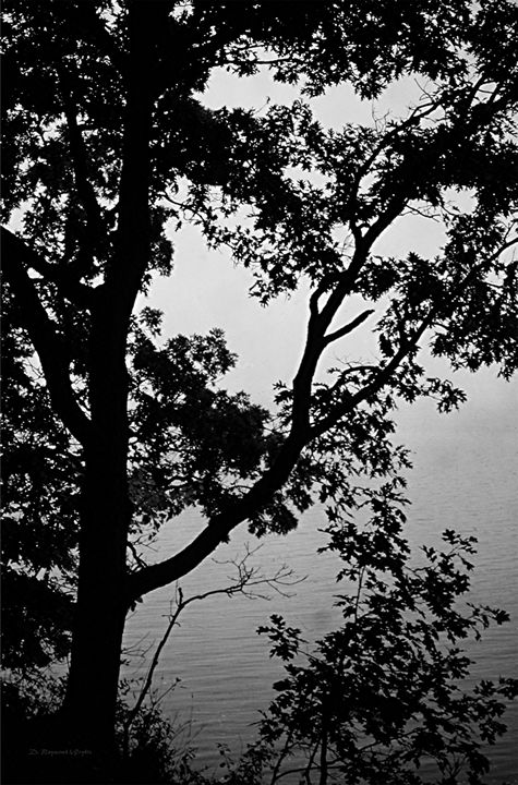 Gray Water, Gray Sky - D. Raymond-Wryhte