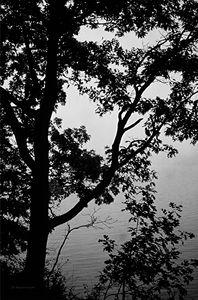Gray Water, Gray Sky