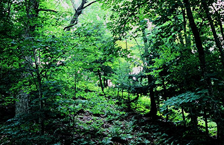 A Forest Green - D. Raymond-Wryhte