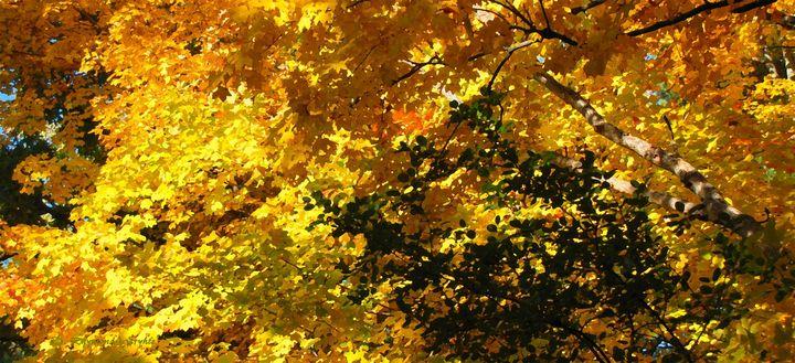 Maple Sunshine - D. Raymond-Wryhte