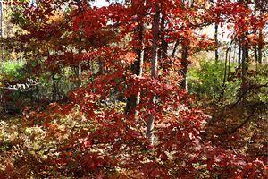 Fall in the Oak Forest 1 - D. Raymond-Wryhte
