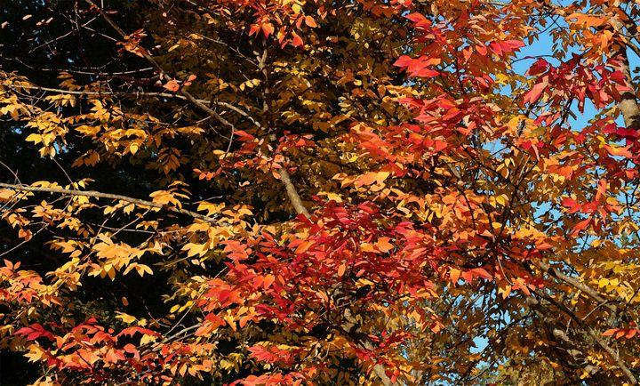 Autumn Purple Ash 2 - D. Raymond-Wryhte