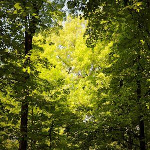 Forest Portal - D. Raymond-Wryhte