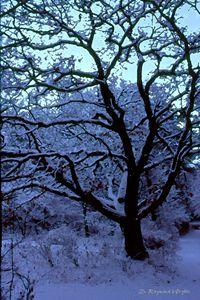A Cold Morning - D. Raymond-Wryhte