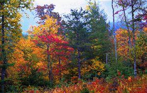 Appalachian Autumn - D. Raymond-Wryhte