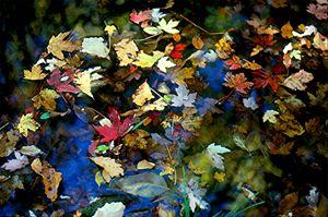 Fallen Leaves in Blue - D. Raymond-Wryhte