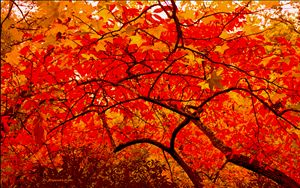The Red Umbrella - D. Raymond-Wryhte