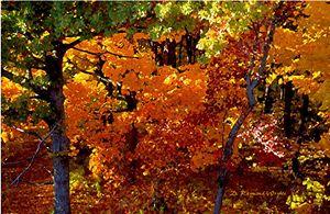 Canopy View - D. Raymond-Wryhte