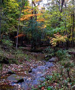 Brook in Autumn - D. Raymond-Wryhte