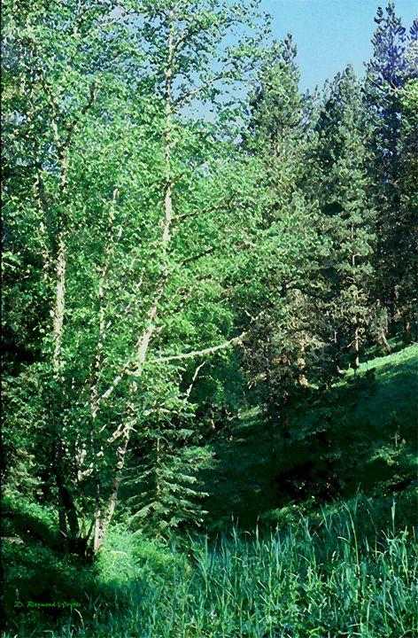 Forest Glade - D. Raymond-Wryhte
