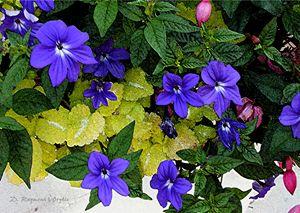 Flowers and Foliage - D. Raymond-Wryhte