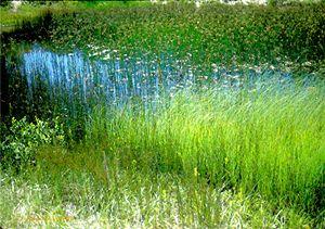 Summer Breeze - D. Raymond-Wryhte