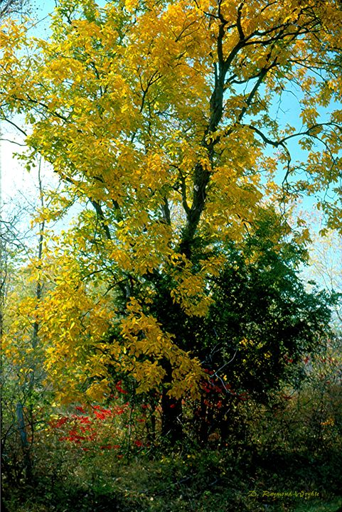 Hickory Classic - D. Raymond-Wryhte