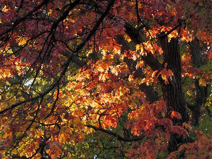 Oak Aglow - D. Raymond-Wryhte