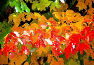 Sugar Maple in Orange  and Yellow - D. Raymond-Wryhte