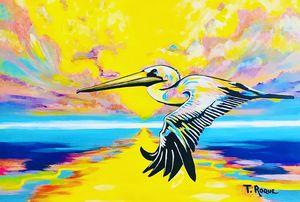 Caribbean Pelican