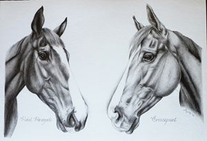 Double Equine Portrait