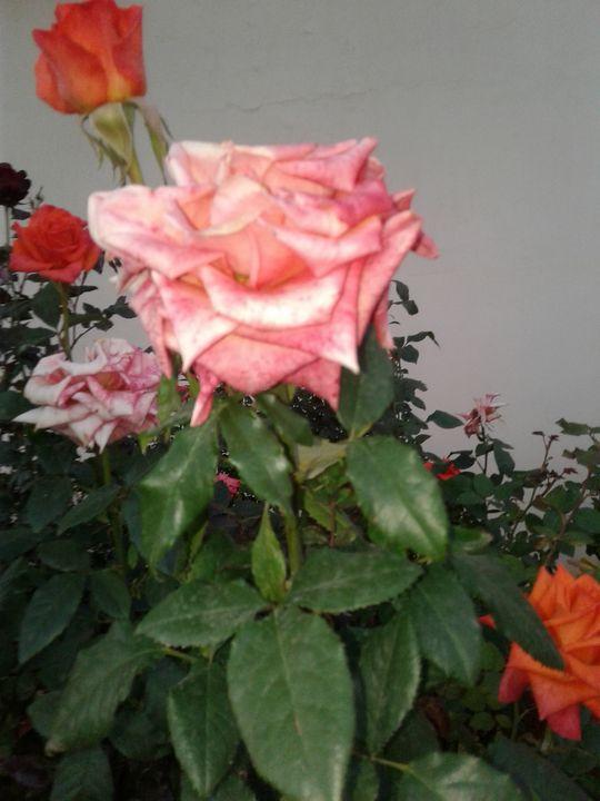 Spring Flower - Nature