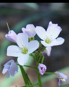 California Wild Flower 1