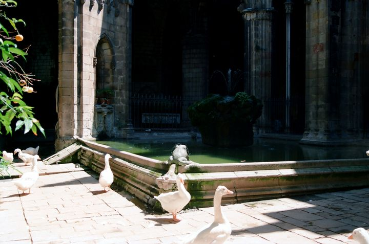 Church Pond in Barcelona Spain - Stonebrook Gallery
