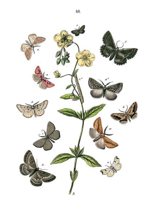 European Butterflies & Moths - Stonebrook Gallery