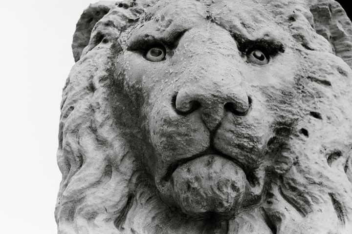 Photo of Sculpture of a lion - Stonebrook Gallery