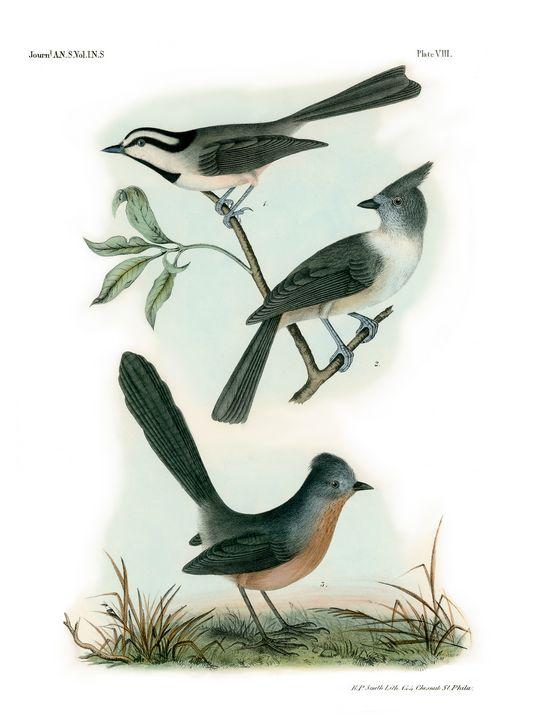Old Bird Flycatcher Wall Art 1840 - Stonebrook Gallery