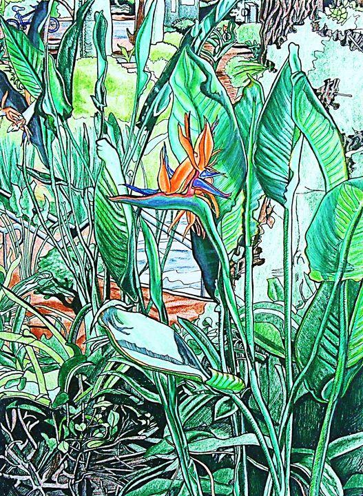 Bird of Paradise - Sapora Sparrow Reror