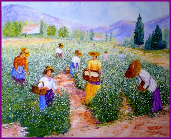la cueillette du jasmin - monique laville