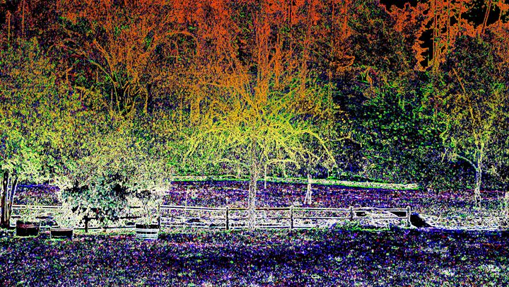 Light of Dark - Charles Papaccio