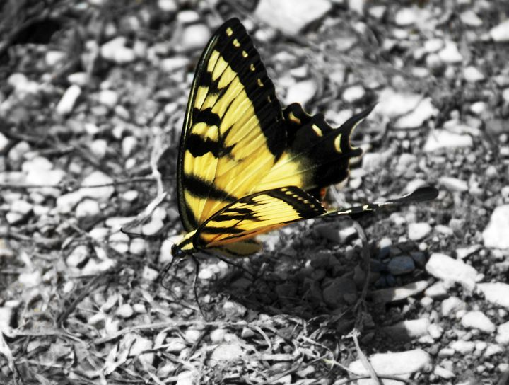 Butterfly on River bed - Strokes of Creativity