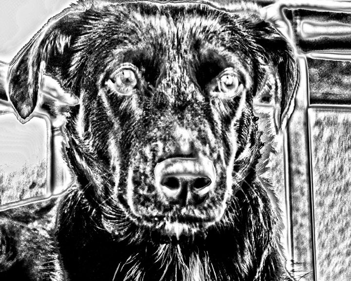 The Dog - My Pictures