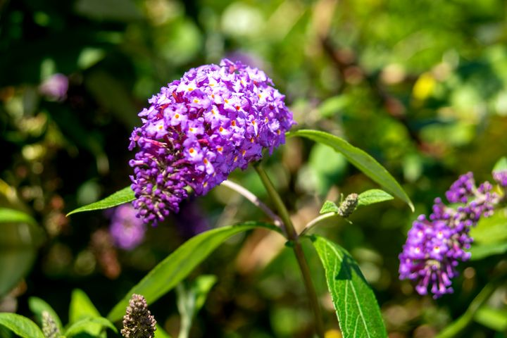 The lilac - My Pictures
