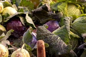 Autumn vegatables