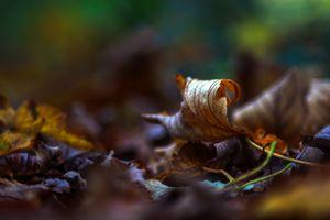 Crunchy autumn