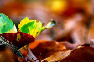 Silence of autumn