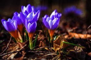 Concept flora : Purple love