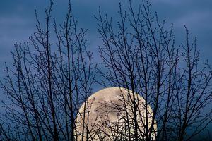 The moon between trree`s