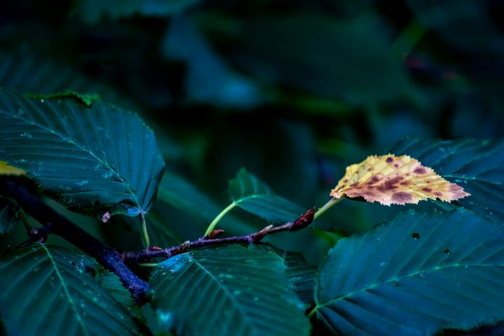 Autumn leaf - My Pictures