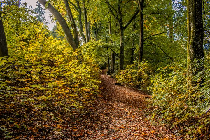 The gentle forest path - My Pictures