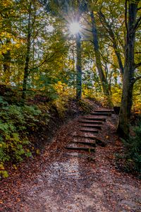 The wooden stairs