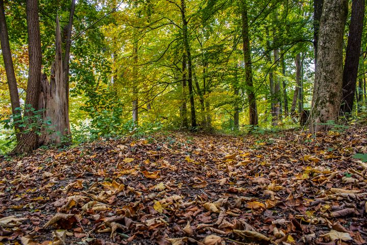 Autumn forest - My Pictures