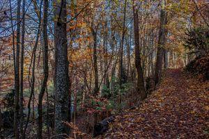 Golden November path